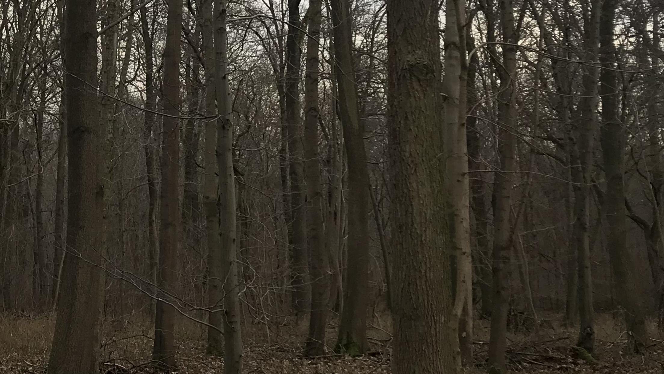 Objekt des Monats: Rarität in Deutschland! Eichen-Edellaubholzbestand bei Leipzig, ca. 40 ha groß