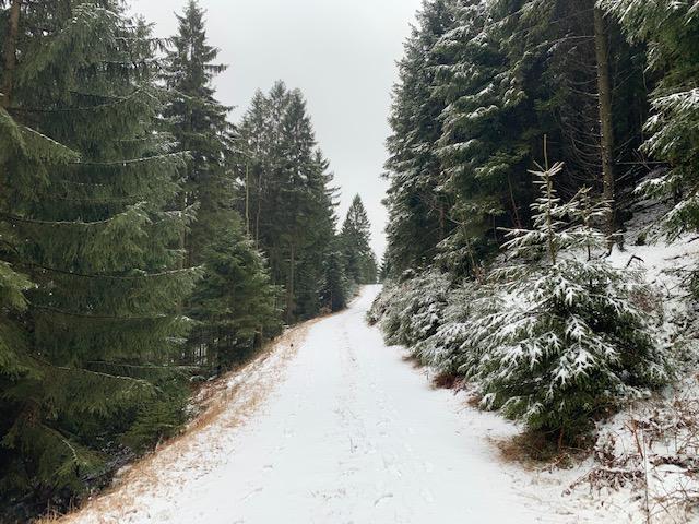 Objekt des Monats: Thüringer Wald, Forstbetrieb und Eigenjagd, Gute Fichten- und Lärchenbestände, erstklassiges Rotwildvorkommen
