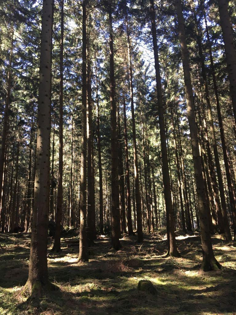 Objekt des Monats: Ca. 100 ha Hochwildeigenjagd und Forstbetrieb in Süd-Niedersachsen, Rotwildjagd